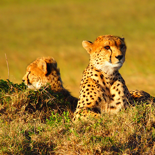 7D/6N GAME SAFARI IN KENYA