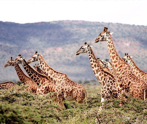 best-african-safari
