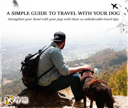 blog-main-image-for-travel-with-dog-2