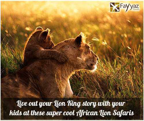 lion-safari-blog-image